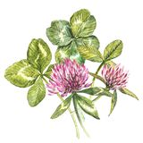 A composition of clover red flowers and leaves - a quatrefoil and a shamrock. Watercolor botanical illustrations. Happy. Saint Patricks Day design element royalty free illustration