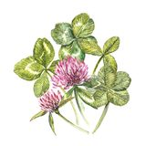 A composition of clover red flowers and leaves - a quatrefoil and a shamrock. Watercolor botanical illustrations. Happy. Saint Patricks Day design element Royalty Free Stock Images