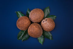 A composition of coconuts on a dark blue background. Nutritious coconuts on green leaves. Delicious and tropical summer fruits. Stock Photo
