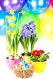 Composition colorée. Oeufs de pâques avec des fres Photographie stock libre de droits