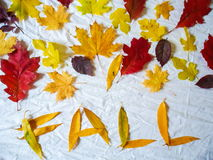 Composition of colorful autumn leaves on a white background Royalty Free Stock Photo