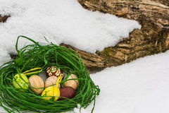 Painted Easter eggs in the snow. Composition of colorful, hand painted easter eggs decorated in green grass nest, lying near the wood, in the snow. Outdoor, on Stock Photo