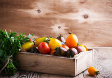 Composition of colorful tomatoes in summer harvest time Stock Photos