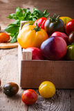 Composition of colorful tomatoes in summer harvest time Stock Image