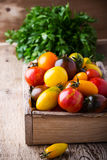 Composition of colorful tomatoes in summer harvest time Royalty Free Stock Photography