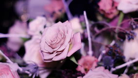 Composition of colors of roses standing