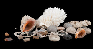 Composition from a coral, stones and shells Royalty Free Stock Images