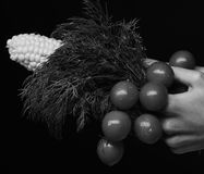 Composition of corn cob, cherry tomatoes and green plant. Farming and fall crops concept. Autumn maize harvest idea. Female hand hold vegetables and bunch of stock image