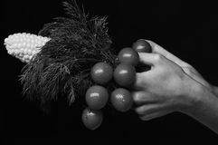 Composition of corn cob, cherry tomatoes and green plant. Farming and fall crops concept. Female hands hold vegetables. And bunch of dill isolated on black royalty free stock images