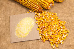 Composition from corn, maize flour Royalty Free Stock Photos