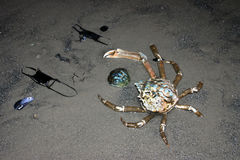 Composition of crab, eggs and shellfish stingray on the beach stock photography