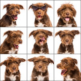Composition of a Crossbreed, 5 months old Stock Image