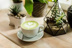 Composition with cup of matcha tea, succulents and cactus in concrete pots. Scandinavian interior royalty free stock photos