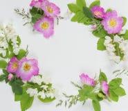 Composition décorative avec les fleurs roses sauvages Photographie stock libre de droits