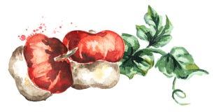 Composition décorative en potirons Illustration d'aquarelle Photographie stock
