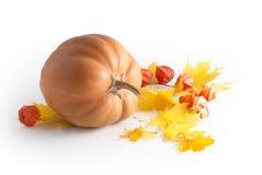 Composition d'automne Image stock