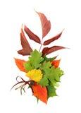 Composition d'automne Photographie stock