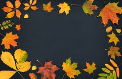 Composition d'automne Feuilles colorées de chute sur le fond foncé Vue supérieure Photo stock