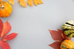 Composition d'automne Potirons, feuilles sur le fond gris en pastel Automne, automne, concept de Halloween Configuration plate, v photo stock