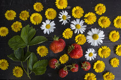 Composition of daisies and strawberries. Composition of white and yellow daisies and strawberries Royalty Free Stock Images
