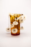 Composition with dandelion seeds and small glass objects Stock Images
