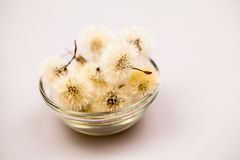 Composition with dandelion seeds and small glass objects Royalty Free Stock Image