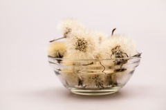 Composition with dandelion seeds and small glass objects Stock Photos