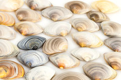 Composition de divers coquillages image stock
