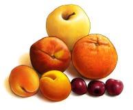 Composition de fruit illustration stock
