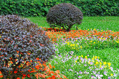 Composition de jardin, buisson et courson Photo libre de droits