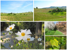 Composition de la Toscane images libres de droits