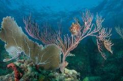 Composition de saillie de récif. photos stock