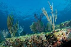 Composition de saillie de récif. photographie stock