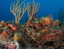 Composition de saillie de récif. image libre de droits