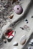 Composition de Seashell Photos stock