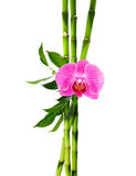 Composition for decoration spa on white background. Bamboo branches with purple orchid - on white background stock image