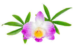 Composition of dendrobium flower and leaves passionflower is iso Royalty Free Stock Image