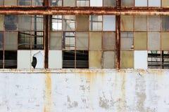 Composition des fenêtres cassées Photo libre de droits
