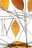 Composition des feuilles d'automne et des spaghetti noirs de riz Photo libre de droits