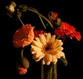 Composition des fleurs photos libres de droits