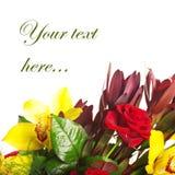 Composition des orchidées, des roses et des leukospermums Photographie stock