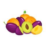 Composition des prunes et des abricots juteux La prune mûre d'abricot de vecteur porte des fruits regard appétissant de tranche e illustration de vecteur