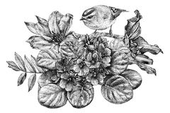 Composition of different flowers, birds and plants drawn by hand Royalty Free Stock Photography