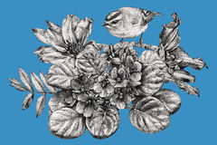 Composition of different flowers, birds and plants drawn by hand Royalty Free Stock Photos