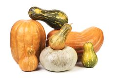 Composition of different kind pumpkins. Royalty Free Stock Photos