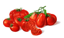 Composition of Different red Tomatoes types grouped. Airbrush illustration. Stock Photos