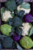 Composition from different varieties of cabbage on wooden background. Cauliflower, kohlrabi, broccoli, white head cabbage. Organic Stock Image