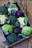 Composition from different varieties of cabbage on wooden background. Cauliflower, kohlrabi, broccoli, white head cabbage. Organic. Fresh vegetables Stock Images