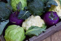Composition from different varieties of cabbage on wooden background. Cauliflower, kohlrabi, broccoli, white head cabbage. Organic. Fresh vegetables Stock Photo
