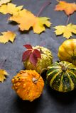 Composition of a different varieties of mini pumpkins and autumn colorful leafs on dark background stock photos